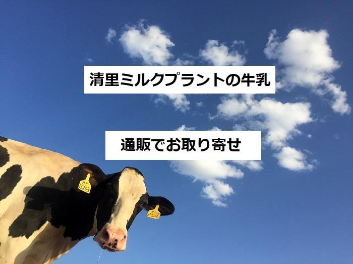 プラント 清里 ミルク