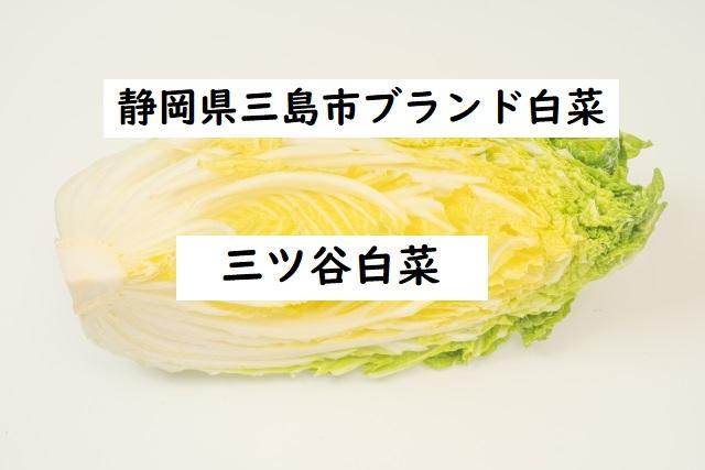 白菜 三ツ谷